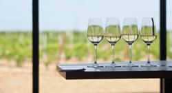 vinos de Rueda, de Open