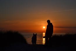 Responsabilidad por perros, de Pixabay