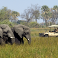 Fauna Zimbabwe, de Open