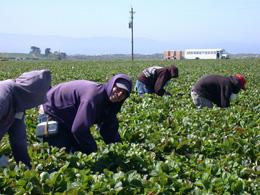 Trabajadores latinoamericanos, de Pixabay