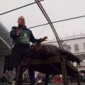Matanza del cerdo en Extremadura, de Open