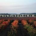 Viñedos de la ruta del Vino de Cigales, de Open