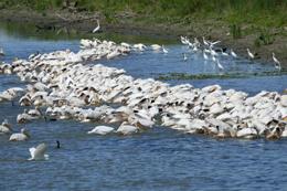 Aves en el Delta del Danubio, de Open