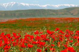 Reserva Aksu Zhabagli, de Open