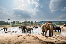 Elefantes en Sri Lanka, de Open